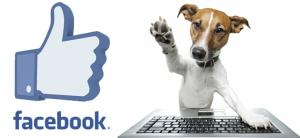Facebook dog shower point