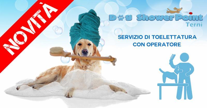 Servizio di toelettatura cani con operatore qualificato a Terni